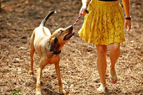 Umstead Dog Woods  Area
