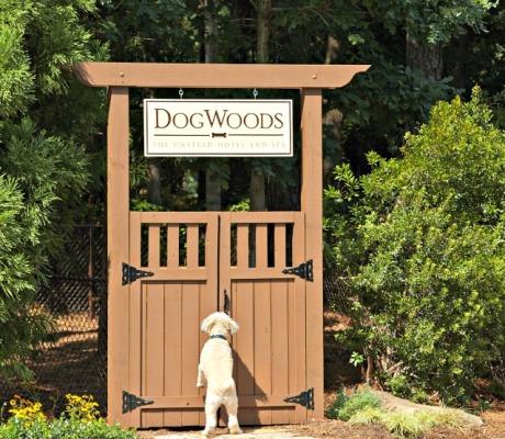 Umstead Dogwood Dog